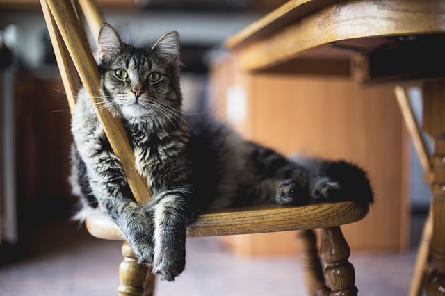 A cat in the house sitting on a wooden chair